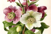 Botanische prints ♡