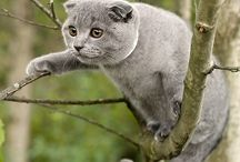 animals up a tree
