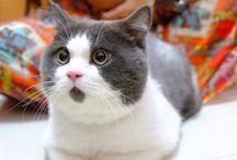 nlc.hu > Cats / Rózsaszín tappancsú, puha szőrgombócok. Vagy éppen karmoló duzzogó házikedvencek. Akármilyenek is, imádjuk őket.
