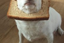 Dogs vs Bread