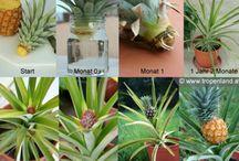 rostliny a bylinky