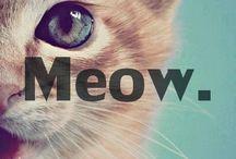 ~Meow ~ Meows~ / by Amanda