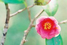 Photography: the plant kingdom