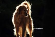Dog backlit