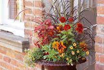 Garden design / Inspiration and ideas for container gardens