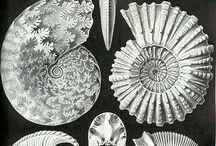 Haeckel & Inspiration
