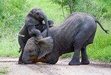 Dyr / Søde dyr