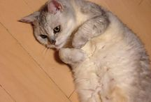 Chiara / My lovely cat