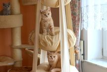 Pro kočku :-)