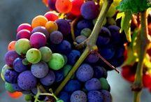 my fruit market
