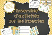 Insectes, thème à exploiter