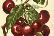 Botanical illustrations. Edible plants / Vegetables, fruits, berries, spices
