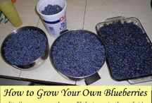 Gardening Blueberries