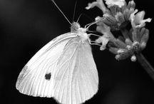 Wings / by CHUCHU NY
