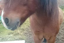 My horse / Horse
