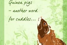 Guinea Pigs / by Kaity Muellner