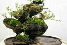 Ikebana, bonsai och liknande