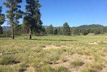TBD HWY 84, Pagosa Springs, CO 81147 / Listing Broker - Shelley Low   Investor's dream -this 22 acres parcel has been divided into 3 home site parcels made up of two 5 acres parcels and one 12 acres parcel. Each lot is allowed to build 2 homes per parcel.