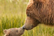 animales cariñosos