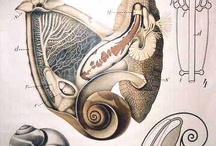 анатомия и не только