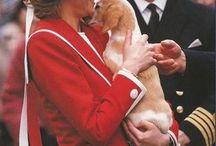 Principessa Love dog