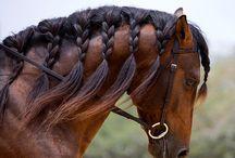 horse braids etc