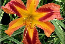 Garden Flowers (Mine) / by Kathy Green