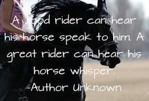 Horses / The beautiful relationship between horse and rider
