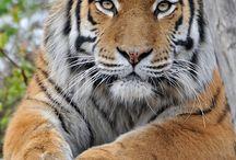 vilde og søde dyr