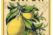 Imagens vintage, labels & stickers