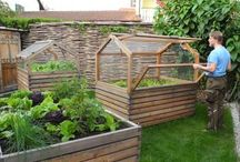 Greenhouse & Raised beds