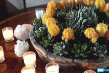 Succulent Ideas & gardens