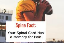 Facts about the Body / Facts about the spine and joints, including the wrist, knee, ankle and hip.