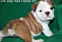 Animal Pics & Memes / by PetsPlusUSA.Com