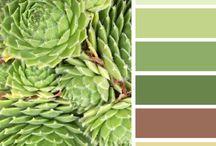 Цвет и сочетание