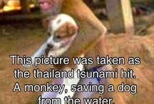Animal stories & friendships