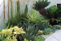 Plant_Garden