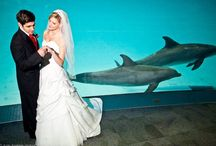 Weddings at the Aquarium! / Enjoy the amazing backdrop of our Atlantic bottlenose dolphins swimming while you and your guests dine in Dolphin Bay®. Entertain your guests with over 250 species of aquatic life in our Amazon, Islands of Steel and Flower Gardens exhibits while enjoying food stations along the way.The possibilities are endless! We are here to make your vision of the perfect wedding come to life! / by Texas State Aquarium