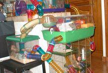 Hamsters en toebehoren