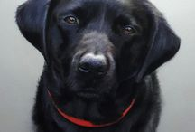 Labrador portraits / A selection of lifelike, high end pet portraits from the Tilly & Blue range
