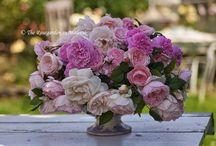 Rosor / Vackraste rosorna