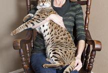 Nature::Cat