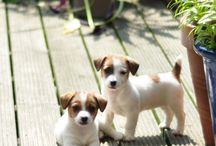 Puppies / One day I'll have my own