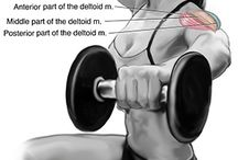 exercise shoulders