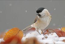 Animals - Birds and Owls