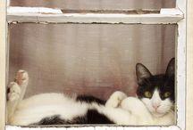 Kitties in windows
