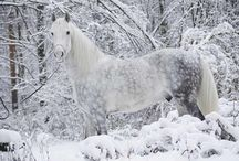 Dapple grey horses(reference pictures)