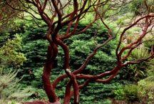 Photos - Nature