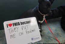 I love FHFA because... / Pets tell us why they love us and we put their picture on facebook and pinterest!
