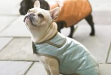 Doggie Gear
